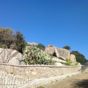 uno dei sentieri vicino al belvedere, con una grande pianta di fico d'india